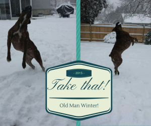 my boxer dogs playing in the snow, photo edited in Canva.com