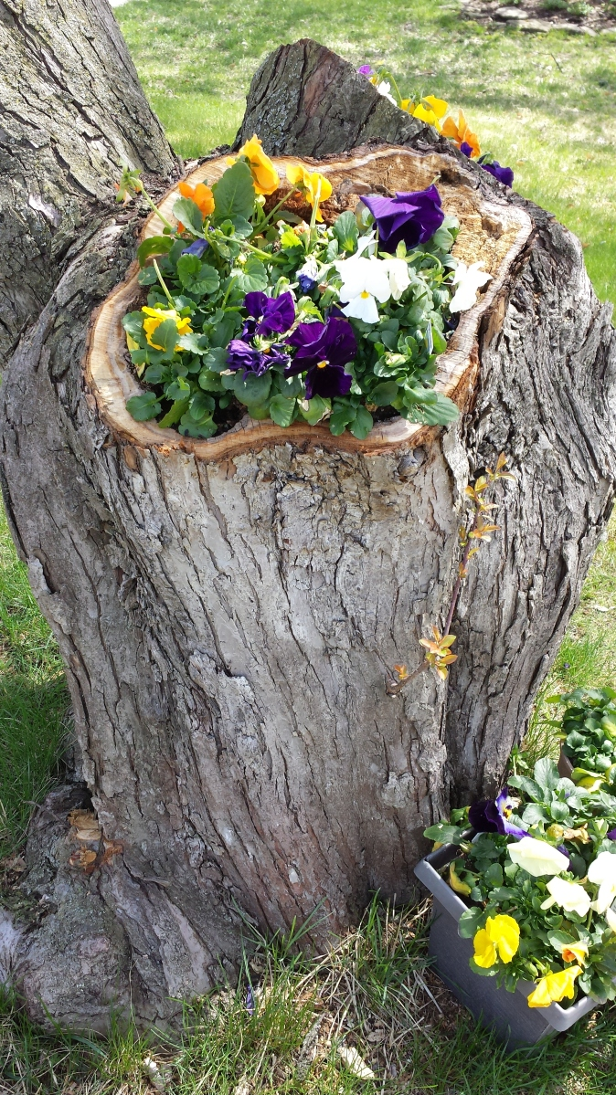Upcycling a live tree 365 days to unstuck for Upcycled tree stumps
